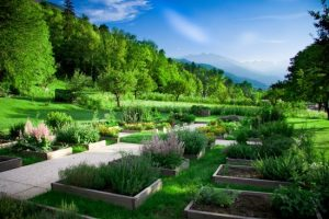 jardin-des-anciens-remedes