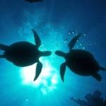 sea-turtles-e1354119669428